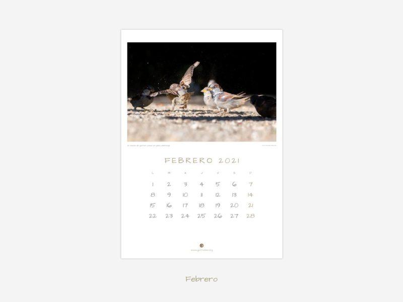 Calendarios de gorriones