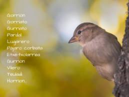 nombres del gorrión común